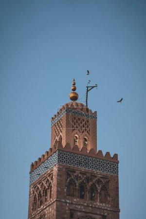 Photo pour Énorme troupeau de cigognes volant autour du minaret de la mosquée Koutoubia dans la médina de Marrakech, Maroc. Capturé au coucher du soleil au crépuscule. Photo prise au Maroc. - image libre de droit