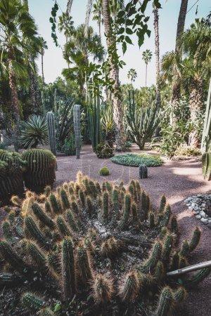 Photo pour Panorama du Jardin Majorelle est un jardin botanique et paysager d'artistes situé à Marrakech, au Maroc. Jardin Majorelle Cactus et palmiers tropicaux. Paradis à l'intérieur du désert. Photo prise - image libre de droit