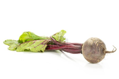 Red beet with greens isolated on white background one bulb root with leave