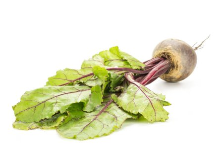 Red beet with greens isolated on white background one bulb root with young leave