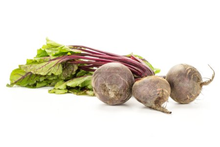 Red beet with greens isolated on white background three bulbs root with fresh young leave