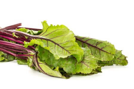 Beet greens bundle young fresh leaves isolated on white backgroun