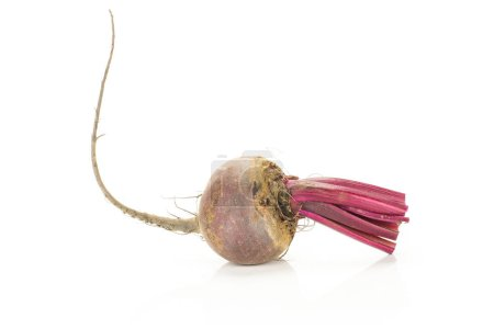 One red beet with cut tops isolated on white background one young root bul