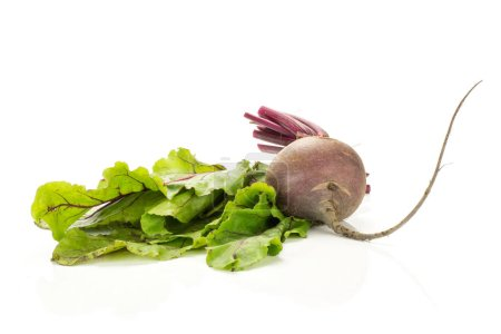 One red beet with green fresh leaves isolated on white background one young root bul