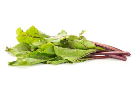 Beet greens bundle isolated on white background young fresh leave