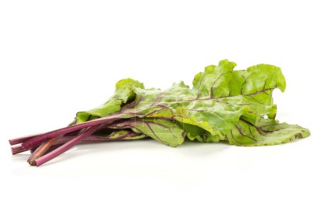 Beet greens bunch isolated on white background young fresh leave