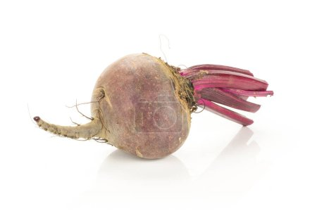 One red beet with cut tops isolated on white background one root bul