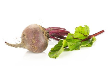 One red beet with cut tops isolated on white background one root bulb and fresh young lea