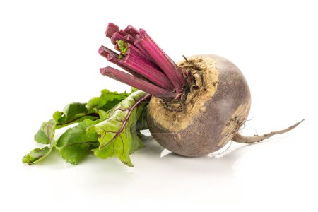 One red beet with cut tops isolated on white background one bulb with green