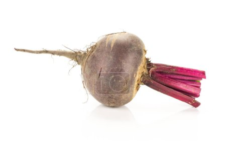 Red beet with cut tops one bulb isolated on white backgroun
