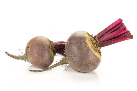 Red beet with cut tops two young bulbs isolated on white backgroun