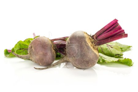 Red beet with cut tops two young bulbs and green leaves isolated on white backgroun