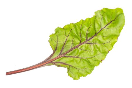 Beet greens flatlay isolated on white background top view one green lea