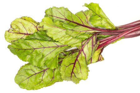 Beet greens flatlay isolated on white background top view fresh green leave