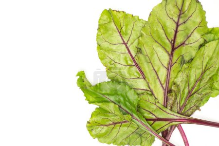 Fan of beet greens flatlay isolated on white background top view fresh young leave