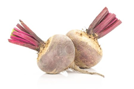Two red beet young bulbs isolated on white background cut top