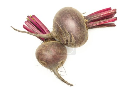 Two red beet young bulbs flatlay isolated on white background top vie