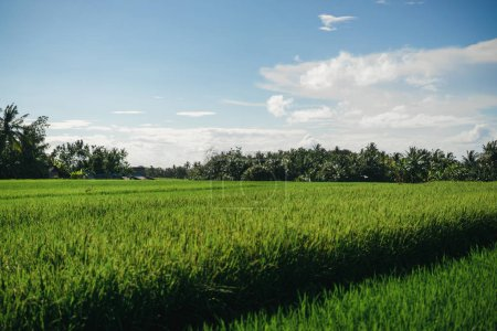 Photo for Scenic view of field with green grass and blue cloudy sky in ubud, bali, indonesia - Royalty Free Image