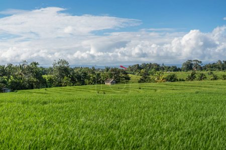 scenic view of field with green grass and blue cloudy sky in ubud, bali, indonesia