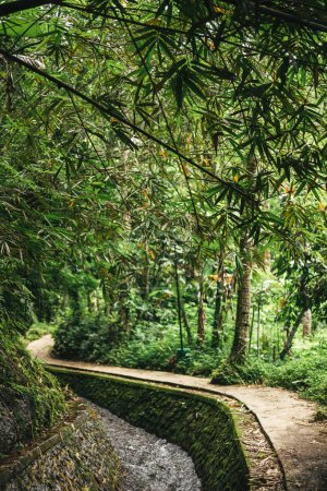 Photo for Scenic view of stream in green forest in ubud, bali, indonesia - Royalty Free Image