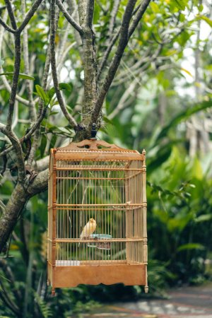 Photo pour Vue rapprochée du petit oiseau dans une cage en bois suspendue à un arbre - image libre de droit