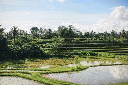 Photo pour Vue panoramique de Tegallalang Riz Terrasses et ciel nuageux arrière-plan, ubud, bali, indonésie - image libre de droit