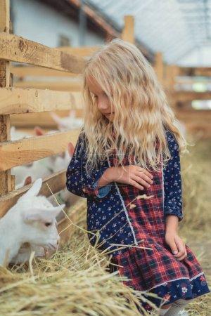 adorable kid looking at small goat at farm