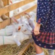 Cropped image of small goats biting kids dress at ...