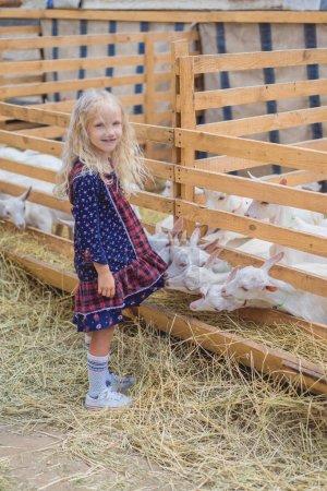 funny goats biting kids dress at farm