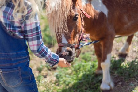 Photo for Cropped image of kid feeding cute pony at farm - Royalty Free Image