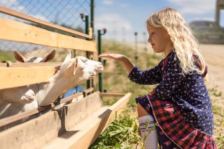 side view of adorable kid touching goats at farm