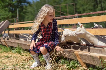 kid sitting on fence at farm and feeding goats