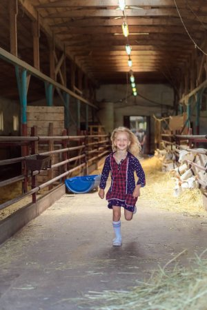 smiling kid running in barn with goats at farm