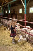 side view of kid palming goats at farm