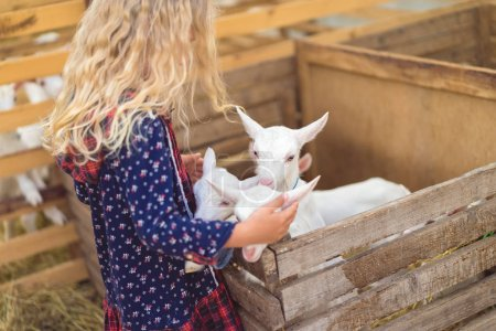 side view of kid hugging goats at farm