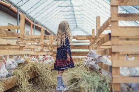 side view of kid standing in stable with goats