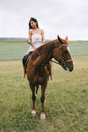 Photo pour Belle femme cheval brun sur champ - image libre de droit