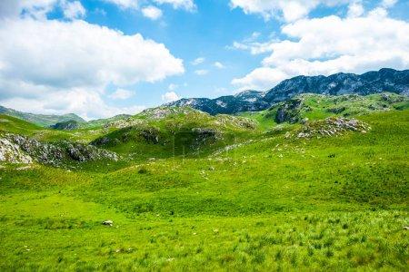 Photo pour Herbe verte et montagnes dans le massif de Durmitor, Monténégro - image libre de droit