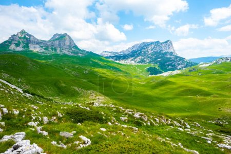 green valley with stones and mountain range in Durmitor massif, Montenegro
