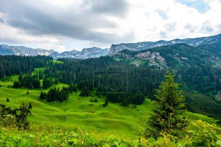 Photo pour Belle vallée verdoyante avec forêt et montagnes en arrière-plan dans le massif de Durmitor, Monténégro - image libre de droit