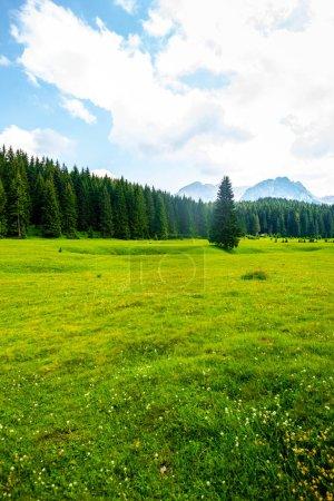 Photo pour Belle vallée verte avec forêt et ciel bleu dans le massif de Durmitor, Monténégro - image libre de droit
