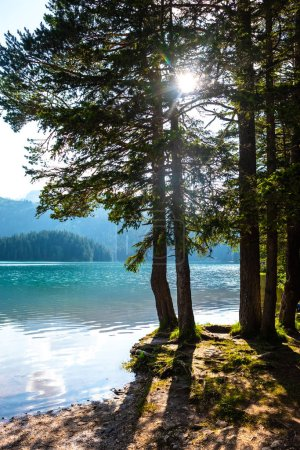 trees on shore of beautiful glacial Black Lake in Montenegro with sunlight