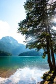 beautiful Bear mountain (meded peak), glacial Black Lake and trees on shore in Montenegro
