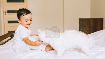 Photo for Cute little child feeding bichon dog with cookie on bed - Royalty Free Image