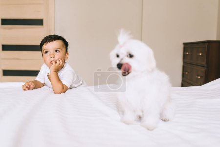 Photo for Cute little kid spending time with bichon dog in bedroom - Royalty Free Image