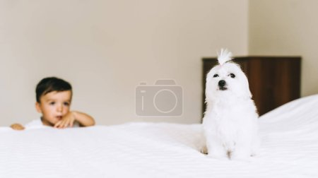 Photo for Adorable little kid hiding behind bed with bichon dog sitting on foreground - Royalty Free Image