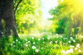 Beautiful spring landscape. Park with old trees, green grass and