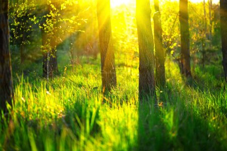 Photo for Spring nature scene. Beautiful landscape. Park with green grass and trees - Royalty Free Image