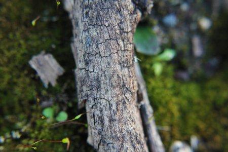 Photo pour La mousse sur les rochers et l'écorce en gros plan macro - image libre de droit