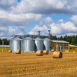 Agricultural silos. Building for storage and dryin...